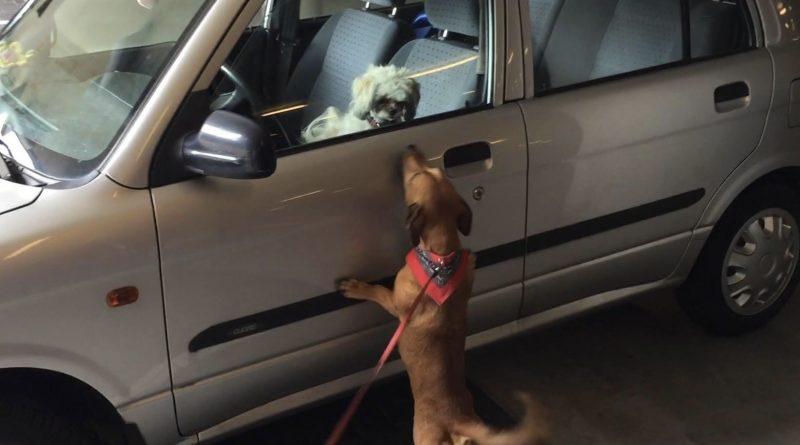 Laat geen hond in de auto achter met dit weer!